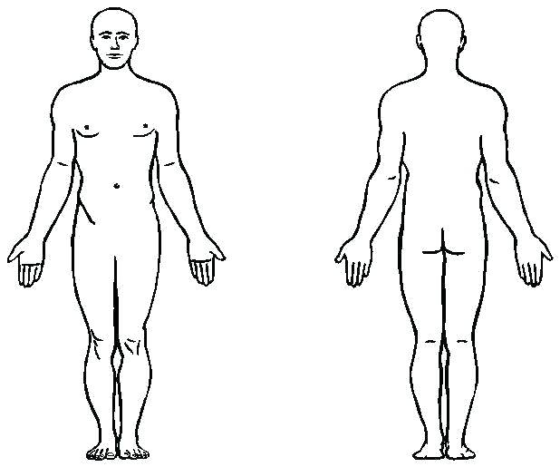618x515 human body outlines outline sketch of human body at explore body