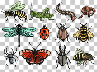 310x233 insect drawing insect s png clipart free cliparts uihere