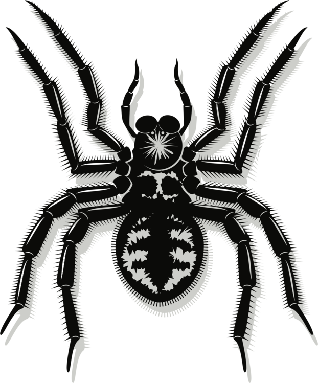 622x749 Spider Web Drawing Line Art Southern Black Widow Cc0