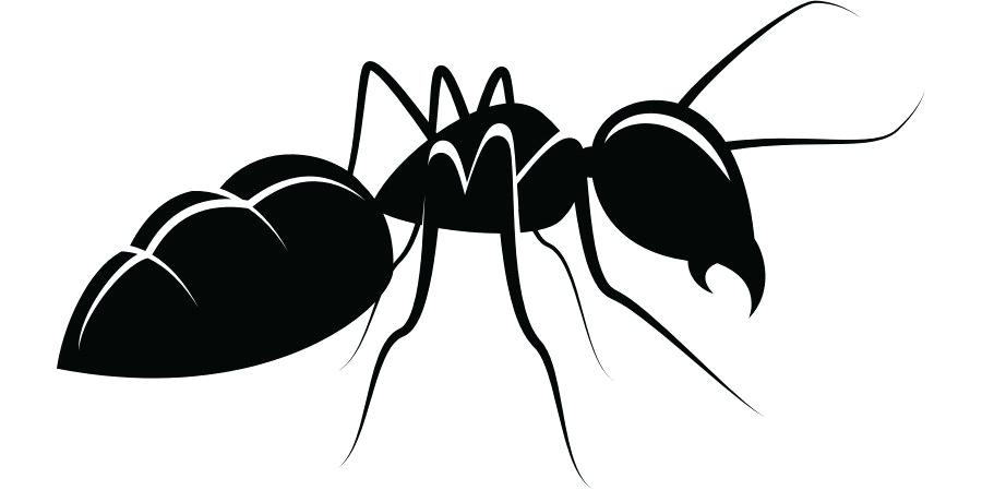 900x460 Drawing Ant