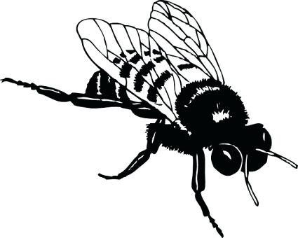 425x340 Drawings Of Bumble Bees