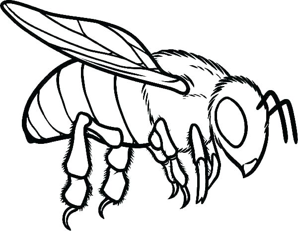 600x464 Drawings Of Bumble Bees