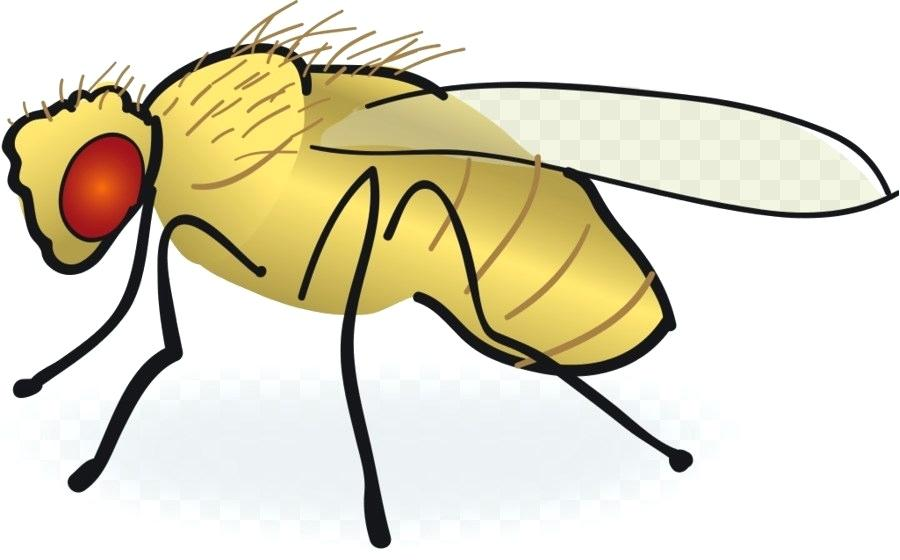 900x560 Drawing Of A Fly How To Draw A Fly For Kids Step Flying Jatt