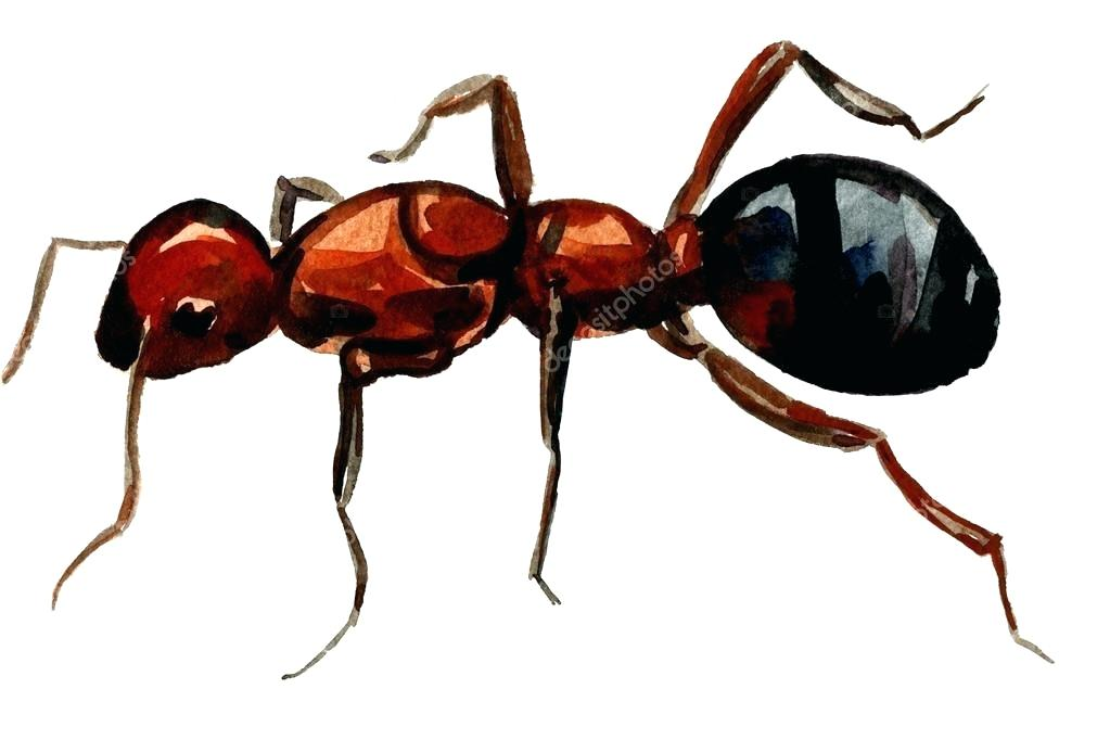 1023x682 Drawing Of Ant Speed Drawing Ant Man