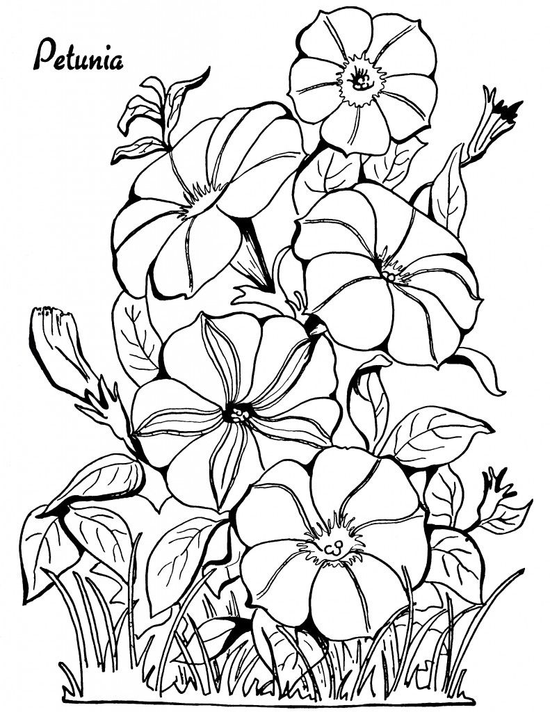 791x1024 floral adult coloring pages! color me free adult coloring