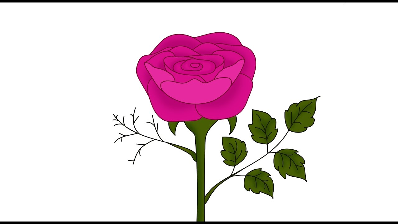 1280x720 How To Draw A Rose Using Illustrator And Photoshop