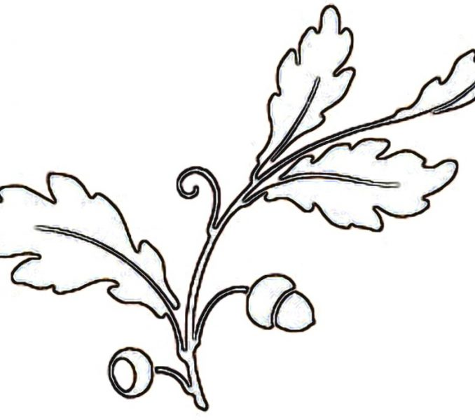 678x600 Fall Tree Outline Coloring Page