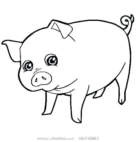 Pig Cartoon Drawing Free Download On Clipartmag