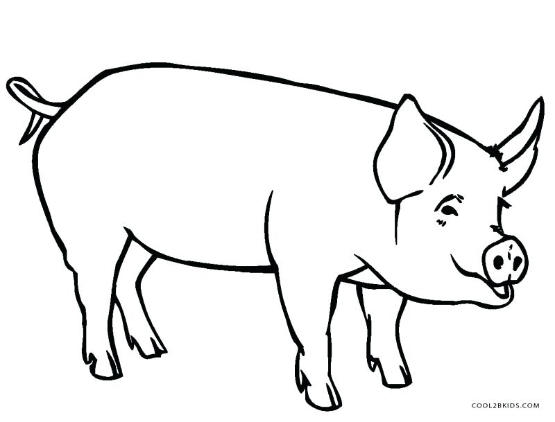 800x609 Pig Coloring Pages For Kids Cute Animal Girls Pdf Drawing Acnee