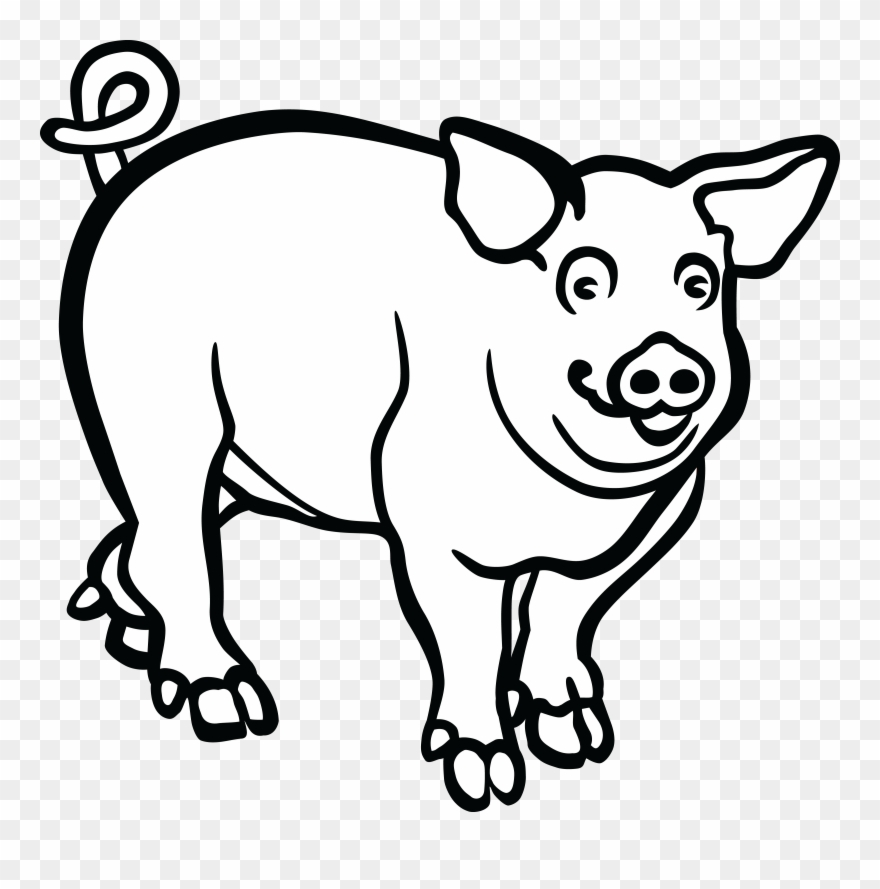 880x889 Wild Boar Line Art Drawing Black And White