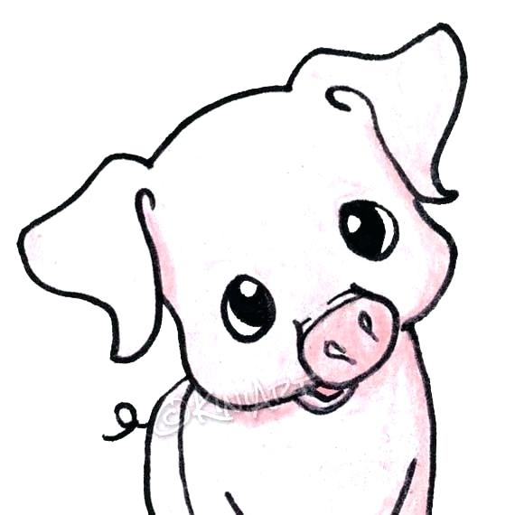 570x570 How To Draw A Pig Easy Draw Easy Pig Face Running