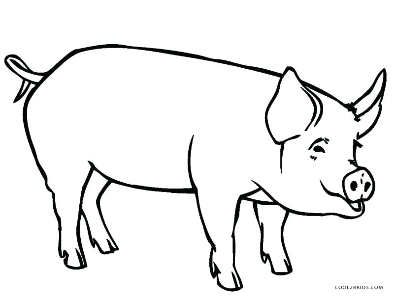 800x609 Pig Drawing For Kids Pig Coloring Pages For Kids Remarkable Design