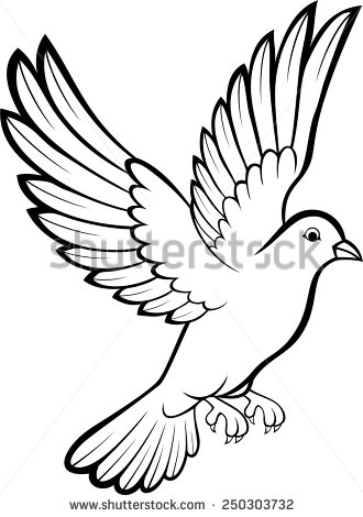 Pigeon Drawing Outline