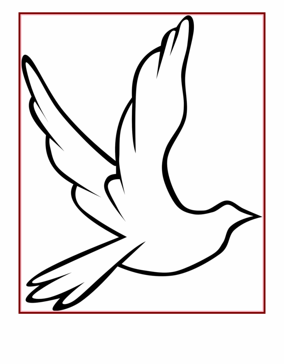 Pigeon Drawing Outline   Free download best Pigeon Drawing