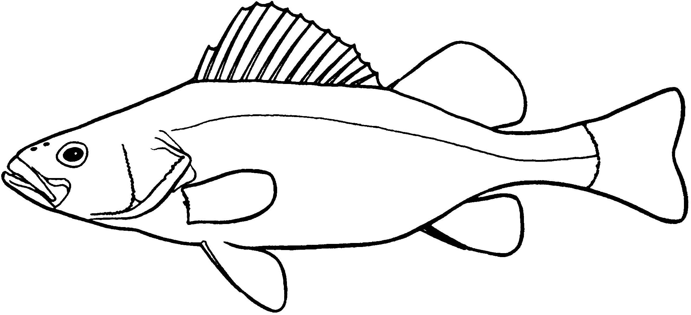 2254x1028 Salmon Drawing Bangus For Free Download
