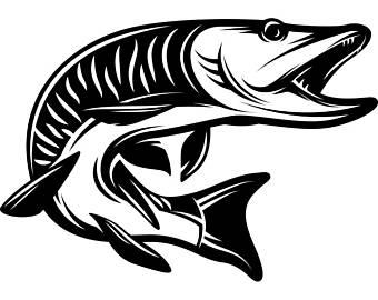 340x270 Muskie Fish Clipart