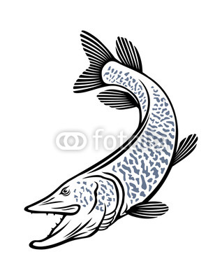 318x400 Muskie Fish Buy Photos Ap Images Detailview