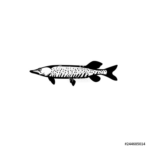 500x500 Pike Fish Vector Stock Image And Royalty Free Vector