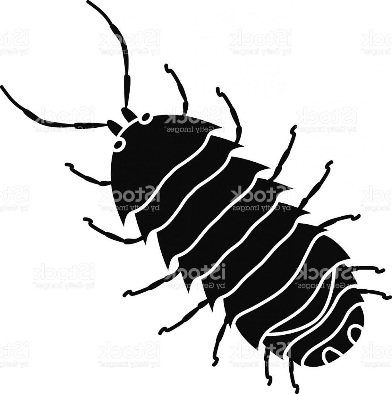 Pill Bug Drawing