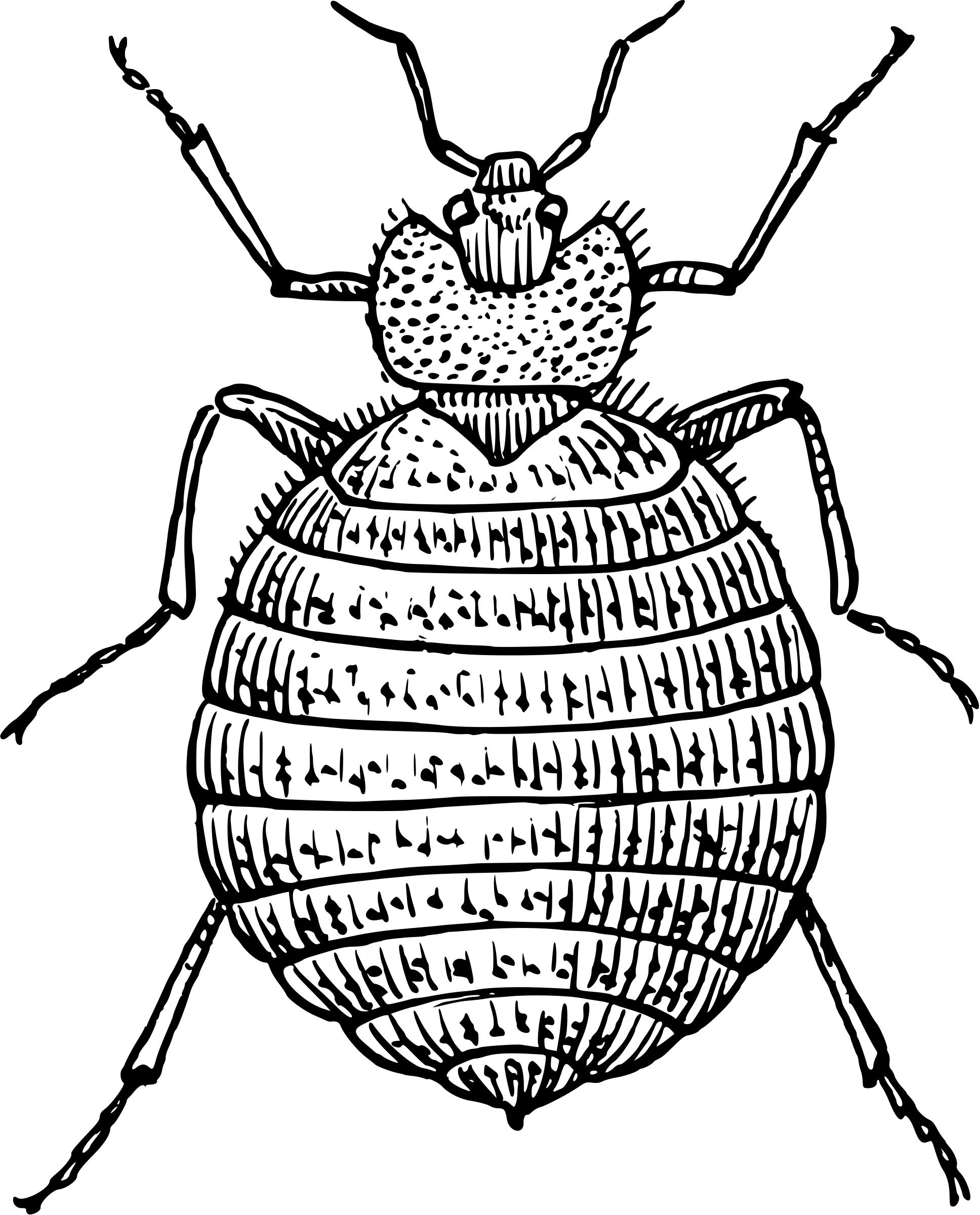 1936x2400 bug drawing sow bug for free download