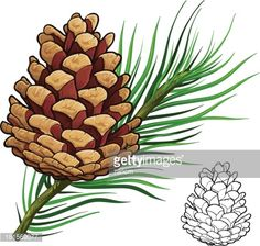 236x224 best pine cone drawing images pencil drawings, pine cone