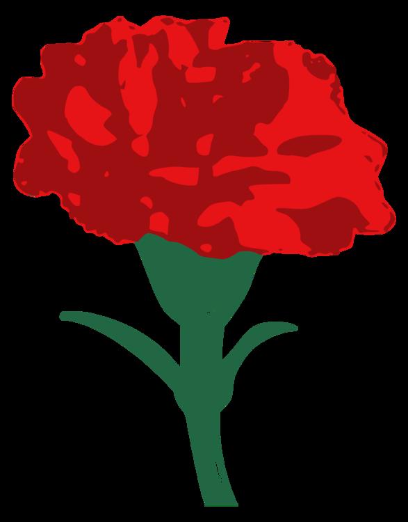 Pink Carnation Drawing