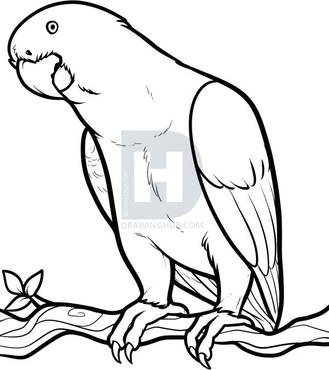 640x720 Parrot Drawing Pirate Parrot Drawing Vector Free Vector Parrot