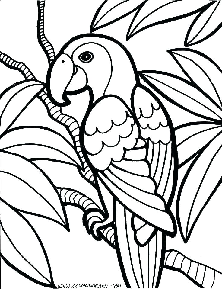 736x957 Pirate Parrot Coloring Pages Pirate Parrot Coloring
