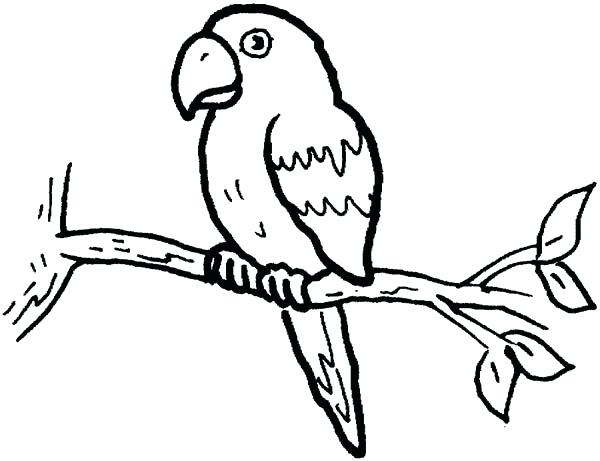 600x461 Pirate Parrot Coloring Pages Pirate Parrot Coloring Pages Flying