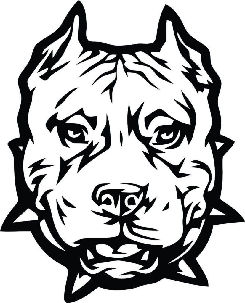 Pitbull Dog Drawing