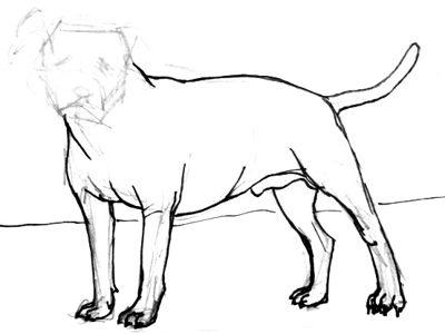 400x300 Drawn Pitbull Outline