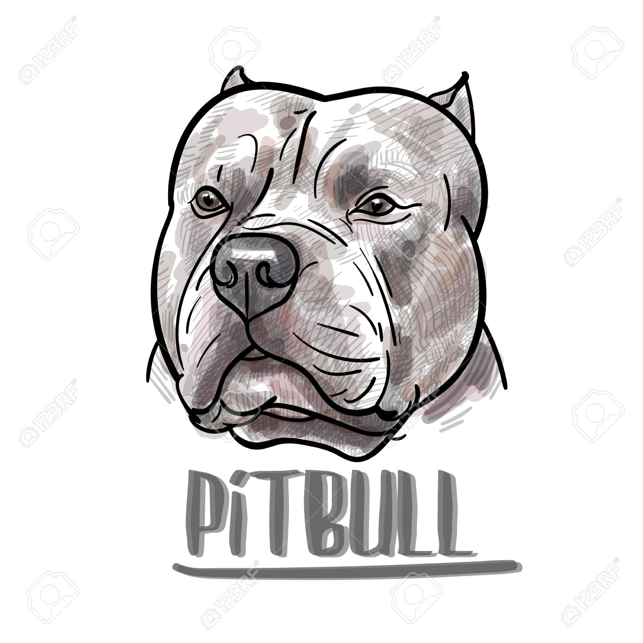 1300x1300 Huge Collection Of 'pitbull Head Drawing' Download More Than