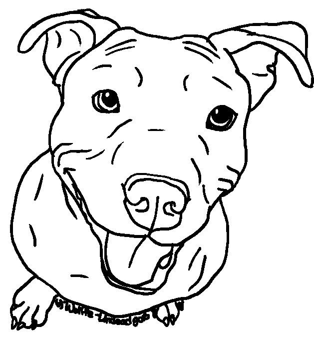 629x700 Pitbull Drawing Easy