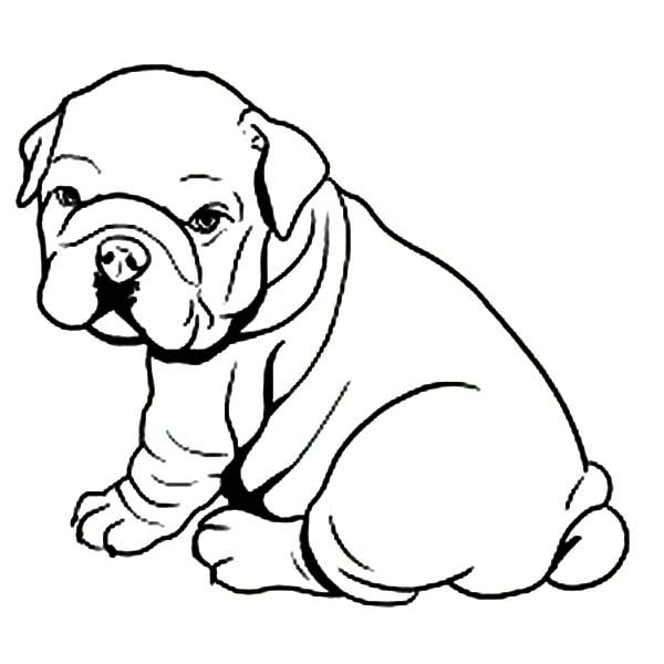 600x600 Pitbull Lineart Family For Free Download