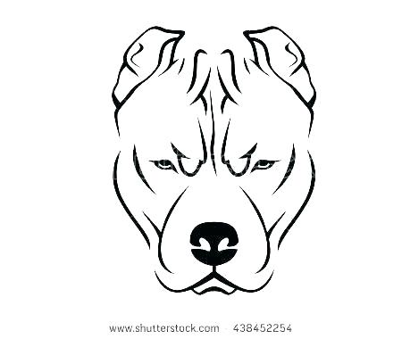 450x380 Pitbull Drawing
