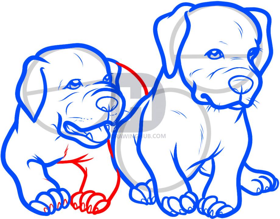920x720 How To Draw Baby Pitbulls, Baby Pitbulls, Step