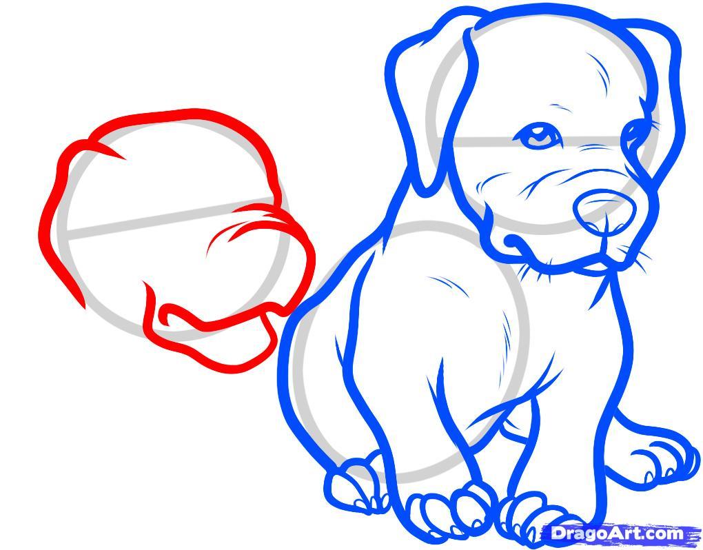 1020x798 How To Draw Baby Pitbulls, Baby Pitbulls, Step