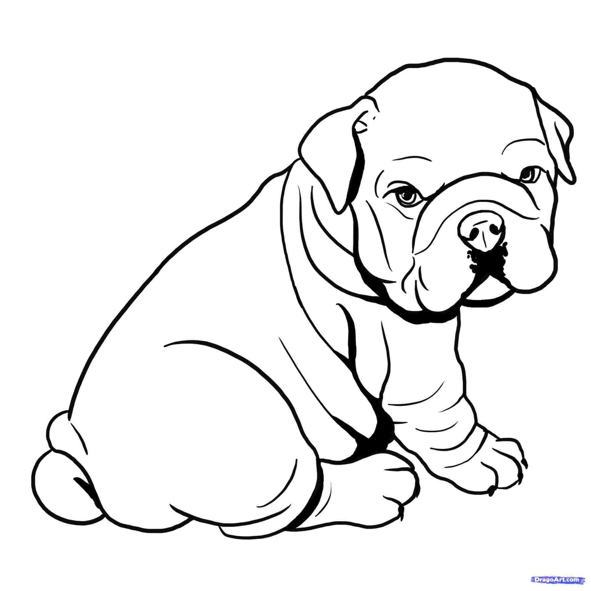 2014x2014 Pitbull Face Drawing Printable