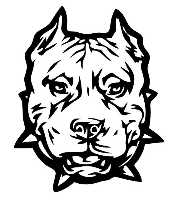 570x635 pitbull car decal for the car pitbull colors, vinyl decals, decals