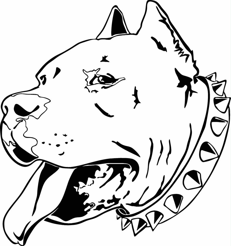 963x1024 Perfect Pitbull Head Sketch