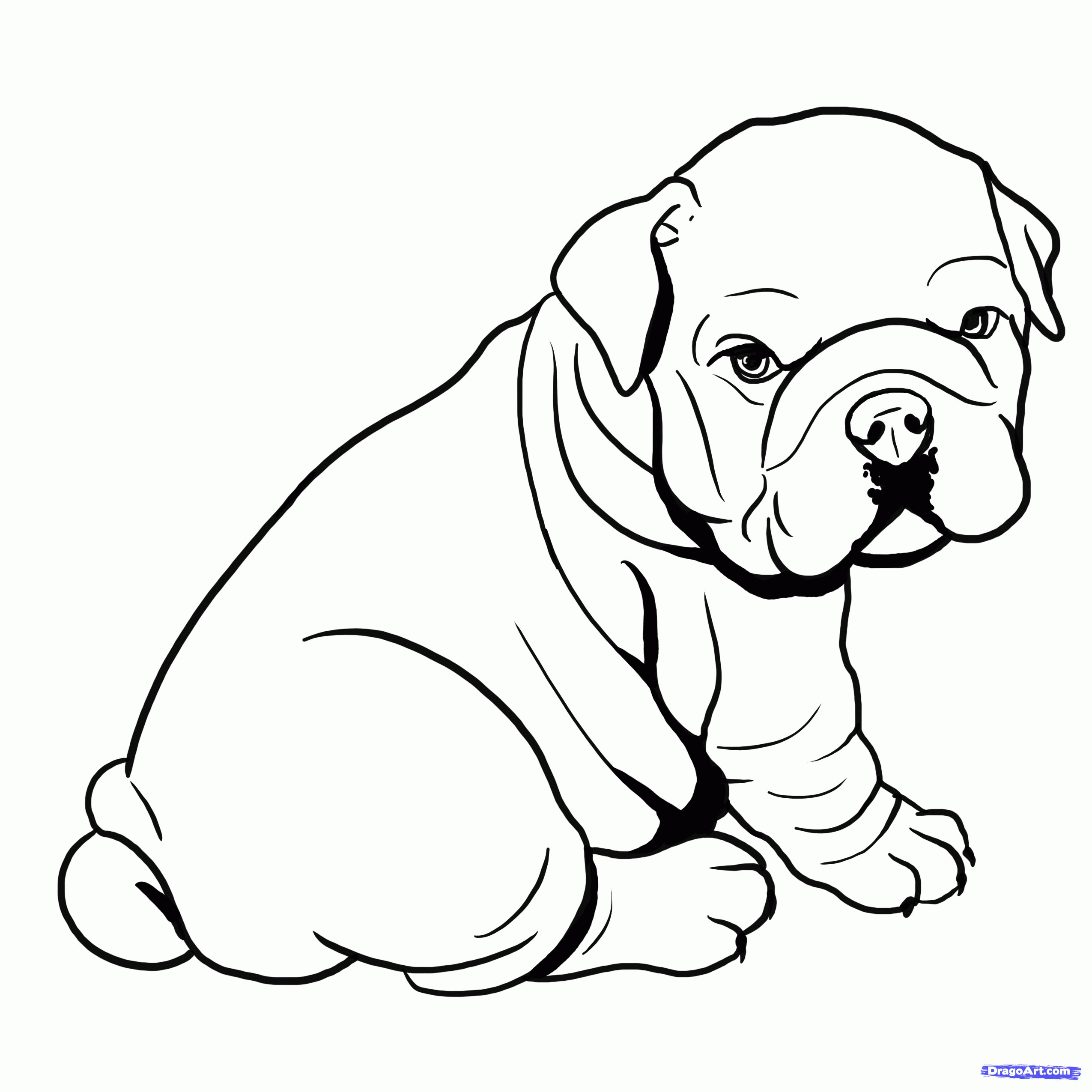 2550x2550 How To Draw A Pitbull Best Drawing Pitbulls At Getdrawings