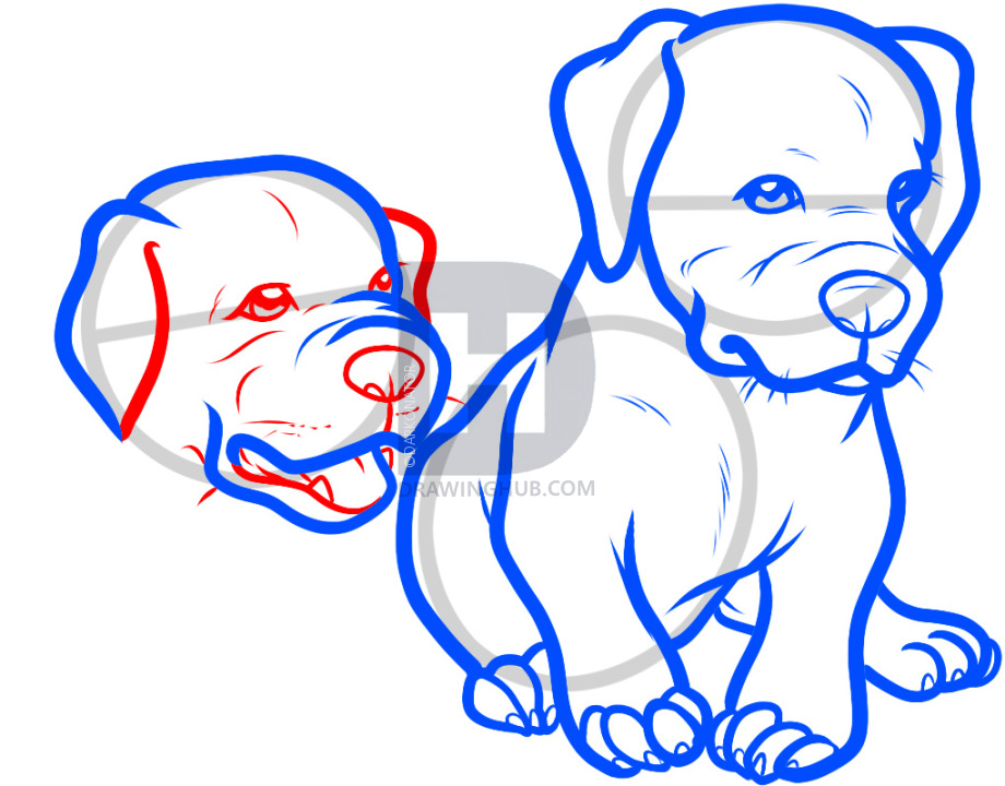920x720 How To Draw Baby Pitbulls, Baby Pitbulls, Step
