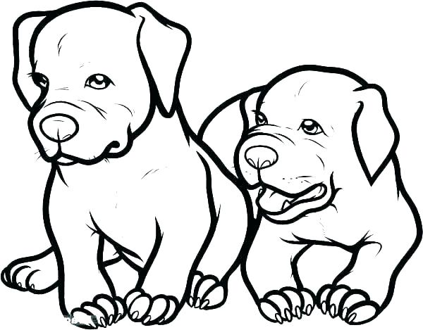 600x469 Pitbull Coloring Pages Realistic Coloring Pages Dog