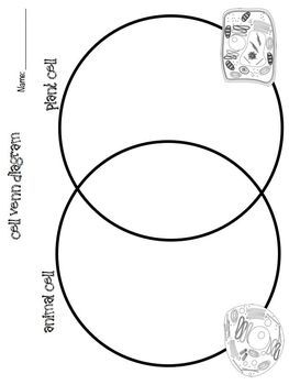 Plant Cell Drawing With Labels | Free download on ClipArtMag