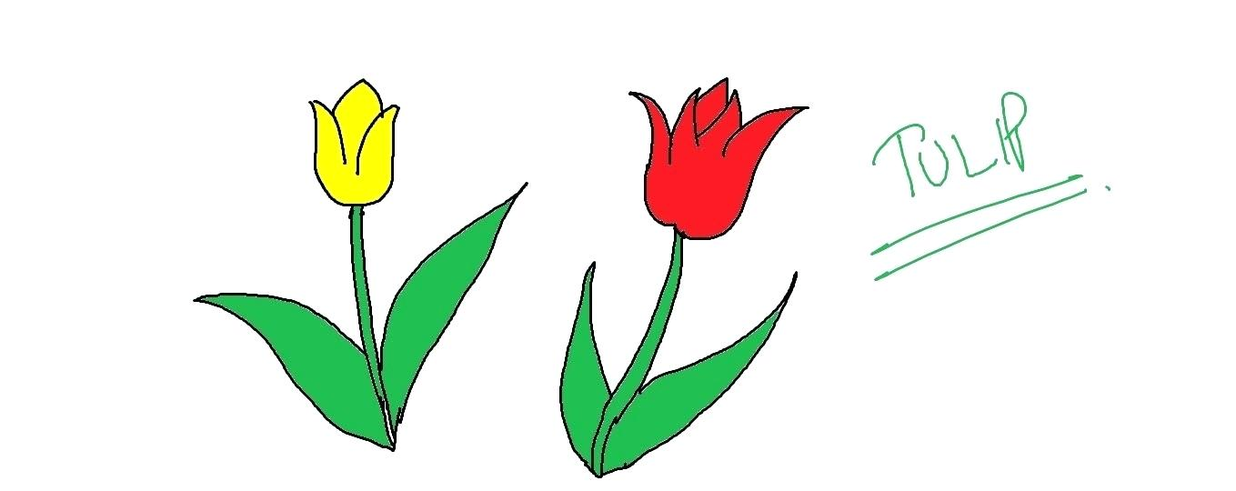 1359x540 tulip pictures to draw image titled draw a tulip step tulip