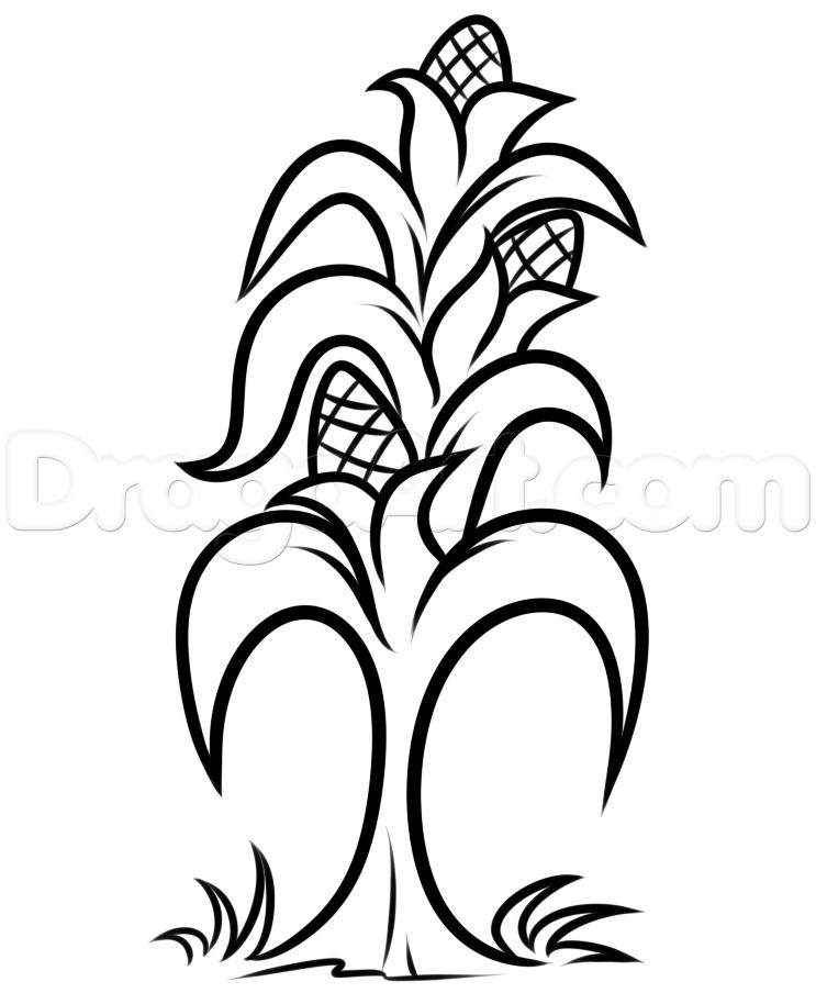 743x904 How To Draw A Corn Stalk, Step