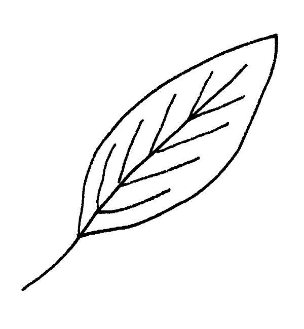 600x649 Ways To Draw Fall Leaves Dawn Nicole