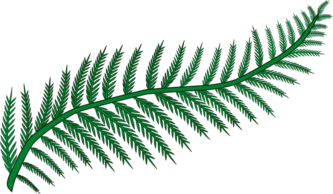 Plant Leaf Drawing
