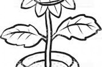 343x228 Pot Plant Line Drawing