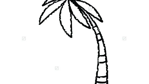 570x320 Palm Tree Line Drawing
